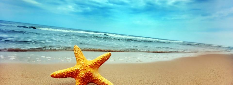 Photo of a beach with starfish.